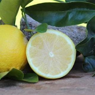 Lisbon Seedless Lemon